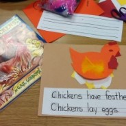 Chicks and Chickens – Integrate Science, Art and Kindergarten Writing all into One Lesson!